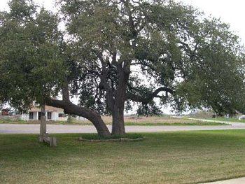 Live Oak Tree Service