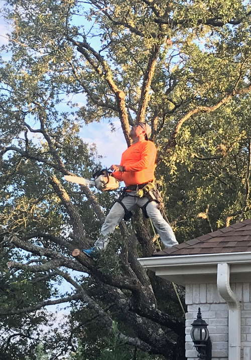 The Importance Of Roof Line Clearance Good Guys Tree