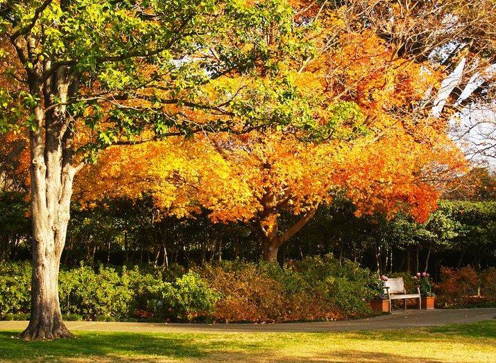 Texas Autumn - Time to Prepare for Winter