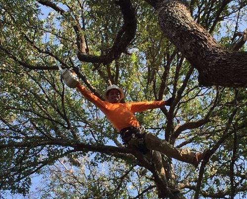Tree Service Austin