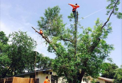 Tree Service Austin TX