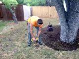 Vertical Tree Mulching Austin TX
