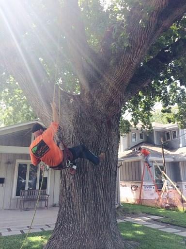 Austin Arborist