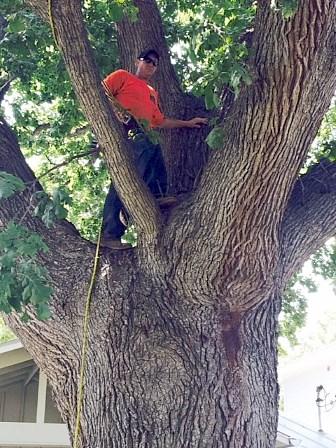 Arborist Austin