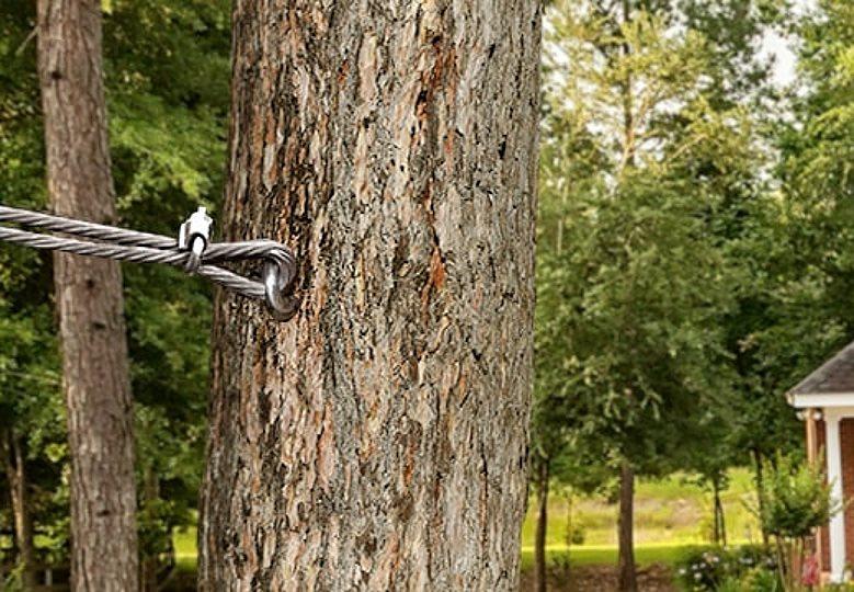 Tree Cabling Austin
