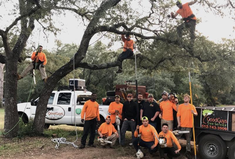 Tree Trimming Austin