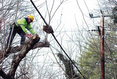 Power Line Tree Trimming