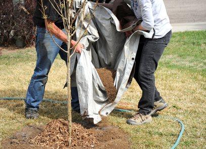 Tree Planting Austin