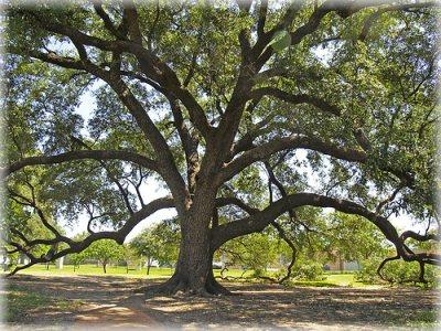 Cedar Park Tree Service