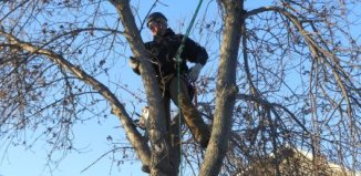 Winter Tree Maintenance