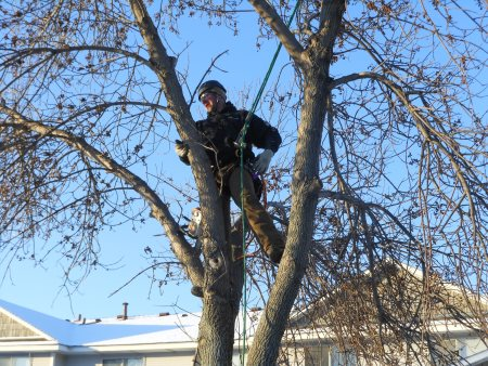 Winter Tree Maintenance